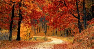 Amazing facts about autumn