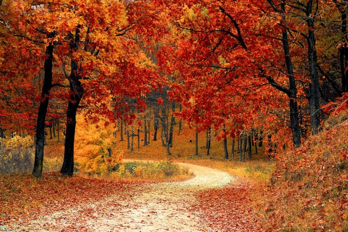 14 interesting facts about autumn