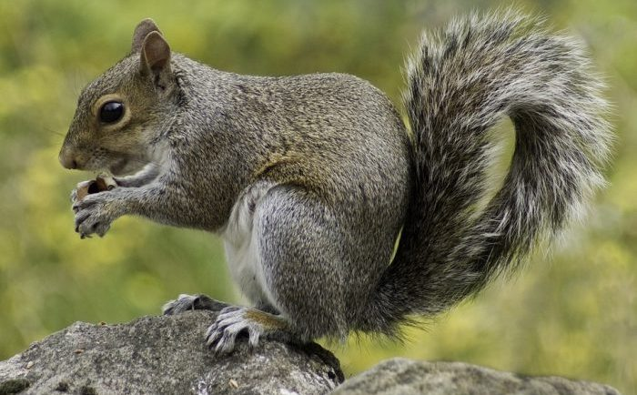 Amazing facts about squirrels