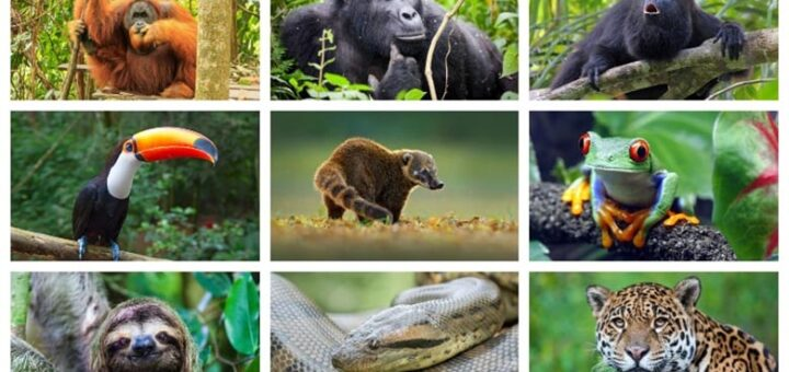 Facts about animals of hot countries