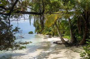 Caribbean sea shore