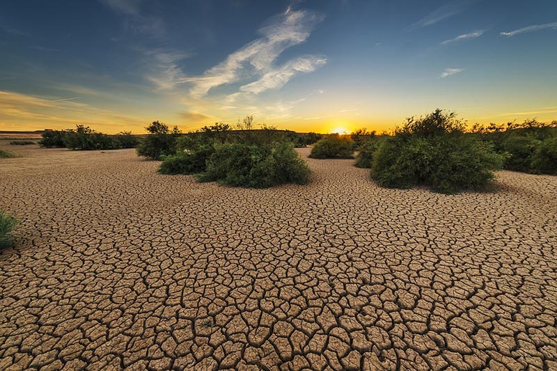 Dehydrated soil