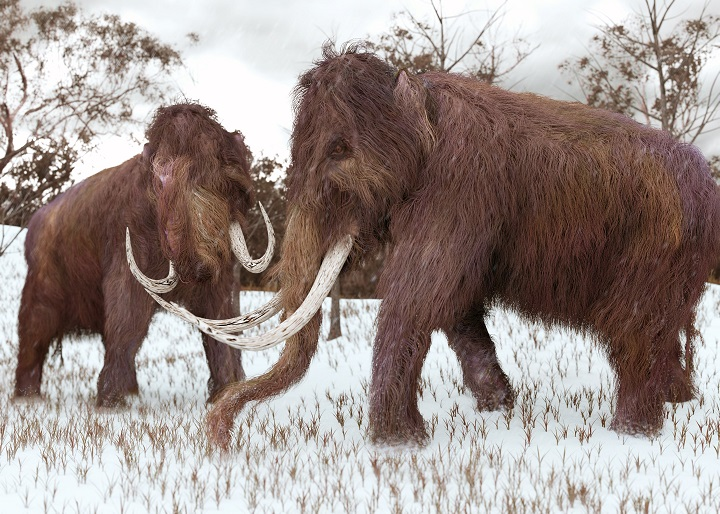 Extinct mammoths