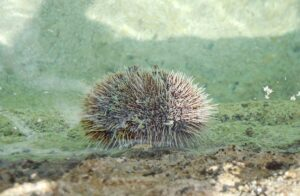 15 Interesting Facts About Echinoderms
