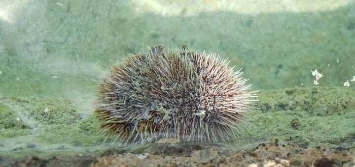 Facts about echinoderms