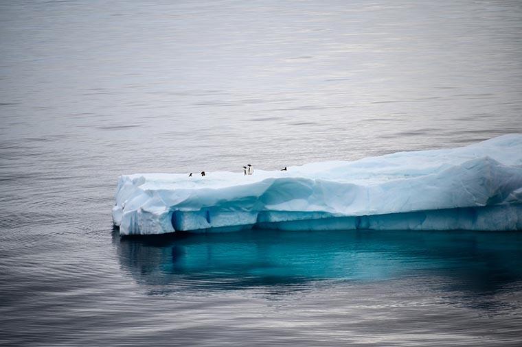 Penguins on the iceberg