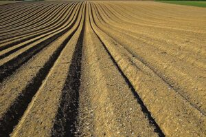 25 Interesting Facts About Soil